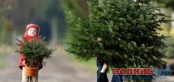 Де у Луцьку продаватимуть новорічні ялинки та сосни?