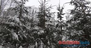 ТОП-8 новорічних красунь України: де найкрасивіша ялинка?