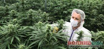 Все, що потрібно знати про легалізацію марихуани в Україні