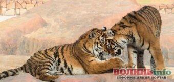 Приємні сюрпризи до Дня закоханих чекають у зоопарку