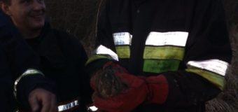На Волині під час пожежі  врятували зайчика(+ФОТО)