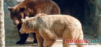 У Луцькому зоопарку прокинулись ведмеді(+ВІДЕО)