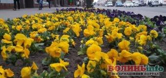 Луцьк квітує: Центр міста виглядає як килим(+ФОТО)