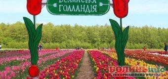 Волинська Голландія: Коли туристи зможуть помилуватись квітами