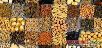Як обрати якісне насіння?