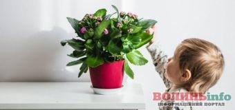 Які рослини поставити у дитячій кімнаті