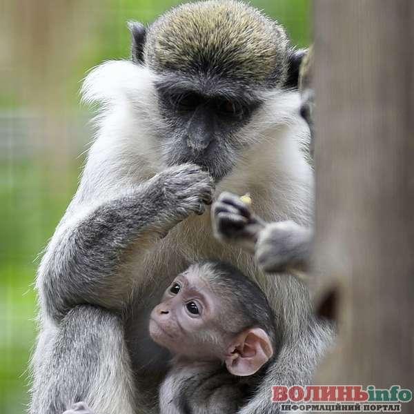 Луцький  Зоопарк