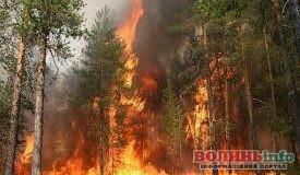 Із лісовими пожежами боротимуться відеокамерами
