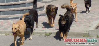 У Луцьку побільшало безпритульних собак