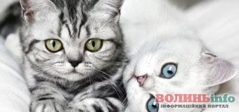 8 серпня – всесвітній день котів: вітайте улюбленців