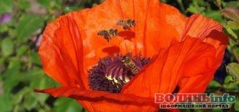 14 серпня: день ангела, свято Маковія, медовий спас, традиції дня