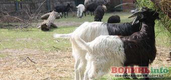 Луцький зоопарк отримав подарунок від енергетиків