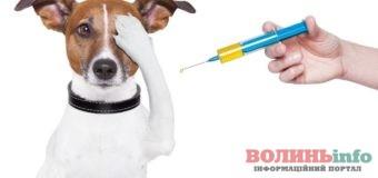 На Київському майдані безкоштовно вакцинуватимуть домашніх тварин