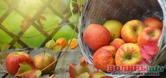 Що приготувати з яблук: 10 найкращих рецептів, які варто зберегти