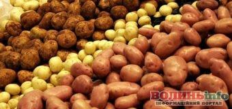 Картопля знову росте у ціні