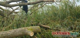 Негода на Волині: повалені дерева та відсутнє світло