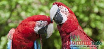 Папуг викрали з Луцького зоопарку
