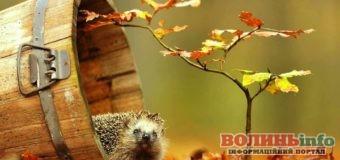 16 листопада: яке сьогодні свято?