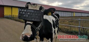 Російським коровам видали окуляри віртуальної реальності: фото