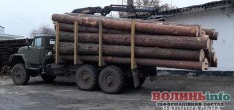 Крали ліс: поліцейські вилучили 200 м. куб. сумнівної лісодеревини