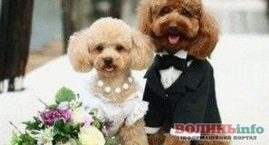 Привітання молодятам з нагоди весілля