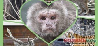 8 березня у Луцькому зоопарку для жінок відвідування безкоштовне