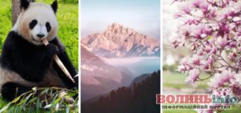 Позитивні новини минулого тижня: від цвітіння магнолій до народження панд