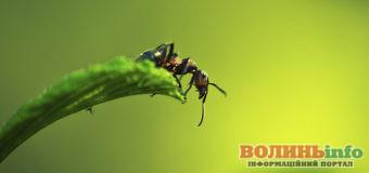 Як позбутися мурах на городі. Прості та дієві методи