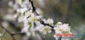 Похолодання та мокрий сніг очікуються на наступному тижні по всій Україні