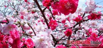 22  квітня – яке сьогодні свято?
