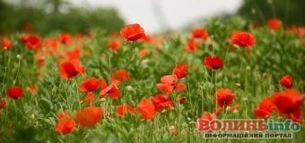 8 травня: чим особливий цей день та що святкують в Україні та світі