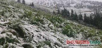 Травневий сніг випав у Карпатах