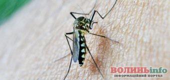 Комарі: як вберегтися від їх комарів вдома та на природі
