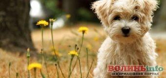 Як вберегти собаку від укусів кліщів?