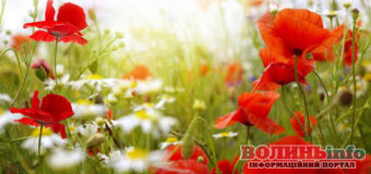 15 червня: чим особливий цей день та що святкують в Україні та світі