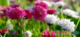 14 липня: чим особливий цей день та що святкують в Україні та світі