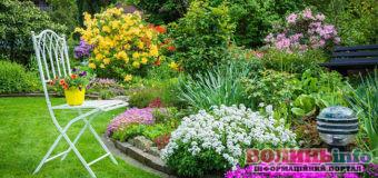 Календар садівника-городника: серпень 2020