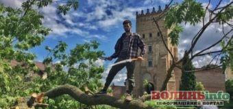 Лесин ясен в Луцьку піде не на дрова, а на музичні інструменти