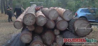 Волиняни незаконно вирубали лісу на 45 тисяч гривень