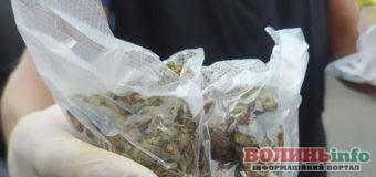 У Луцьку «на гарячому» затримали чергового закладчика наркотиків