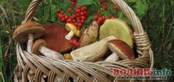Тихе полювання: як відрізнити їстівні гриби від отруйних