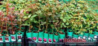 Фейкові троянди продавала у соцмережі волинянка