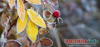На Волині прогнозують заморозки – а Ви готові?