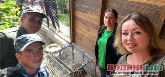 У Луцькому зоопарку поповнення