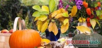 Календар садівника-городника: листопад 2020