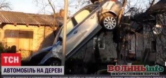 Автомобільне гніздування: машина після ДТП застрягла на дереві