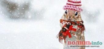 Цьогорічна зима буде холодною і з дощем – так прогнозують синоптики