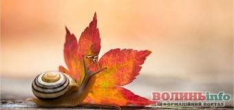 1 листопада: чим особливий цей день та що святкують в Україні та світі
