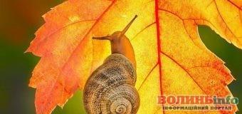 12 листопада: чим особливий цей день та що святкують в Україні та світі