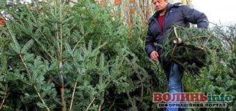 Готуємося до новорічних свят: стало відомо, де у Луцьку будуть продаватимуть хвойних дерева